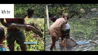 BIG FISH CATCHING AT POND - fishing a lot of big fish || so amazing