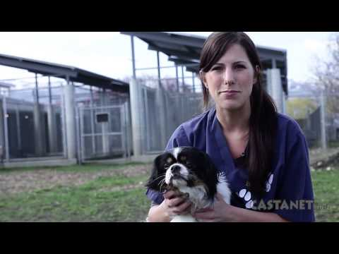 Pet of the week |  April 2st 2013