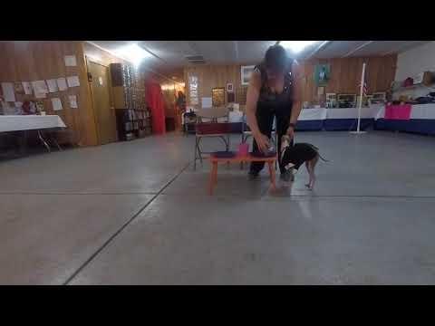 Dog Scout Talent Show 2018