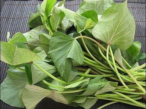 Mang thai ăn rau khoai lang được không Mang bầu có nên ăn rau khoai lang