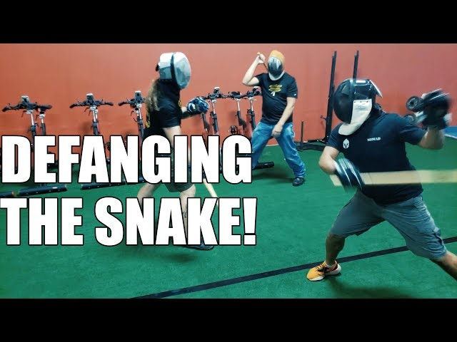 Defanging the Snake!! Full Contact, Full Speed, and Slowed Down For Your Analysis!