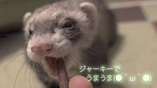 All subtitles in the movie are in Japanese. Ferret to eat jerky. 一...