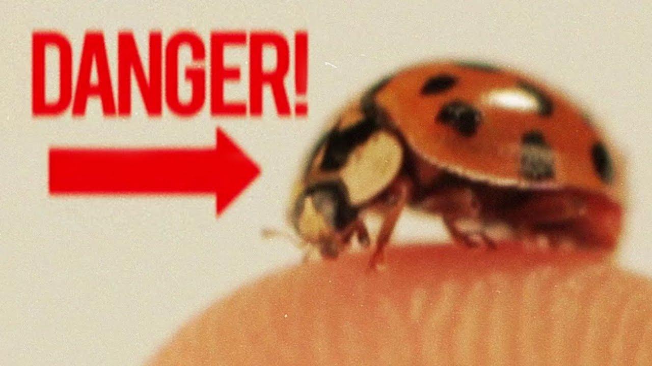 Badass Facts About Ladybugs Youtube