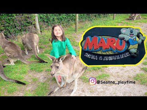 The Best Place To Play With Koala & Kangaroo At Maru Koala & Animal Park