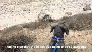 Bo's Confidence Boosting Board & Train San Fernando Valley Los Angeles Refine Your K9 Dog Training