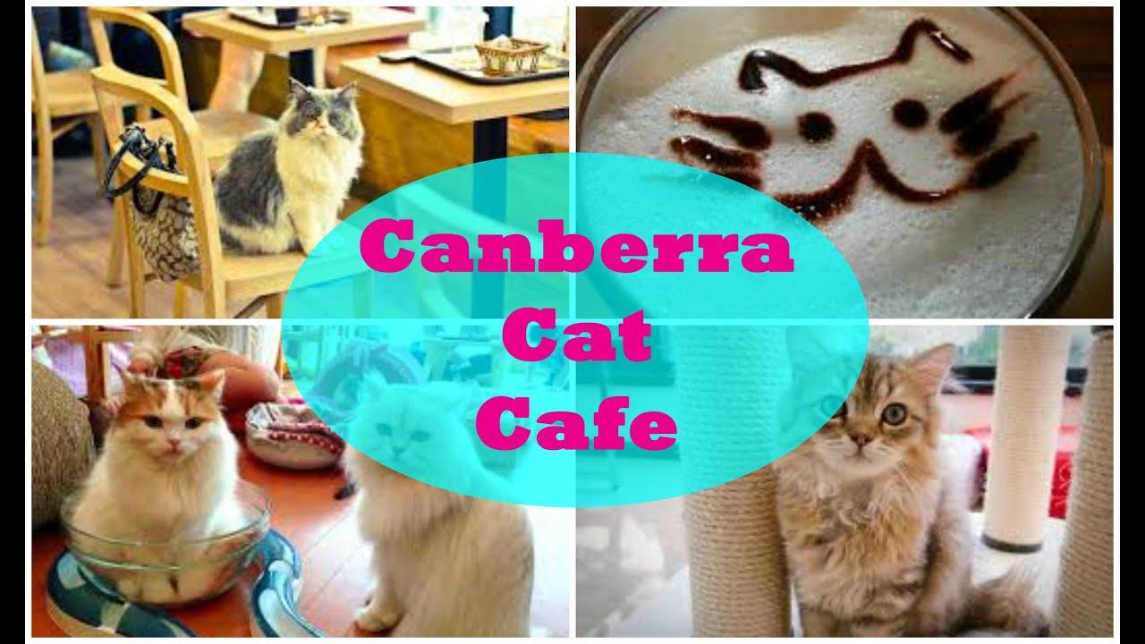 Cat Cafe Canberra