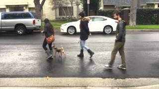 The Good Dog Minute 3/4/15: Jax, From Nightmare To Dream - The Walk Doctor Is In!