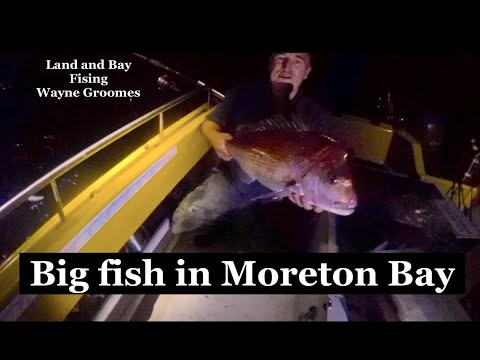 Monster Fish In Moreton Bay