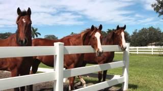 Circle S Farms - South Florida Equestrian Center