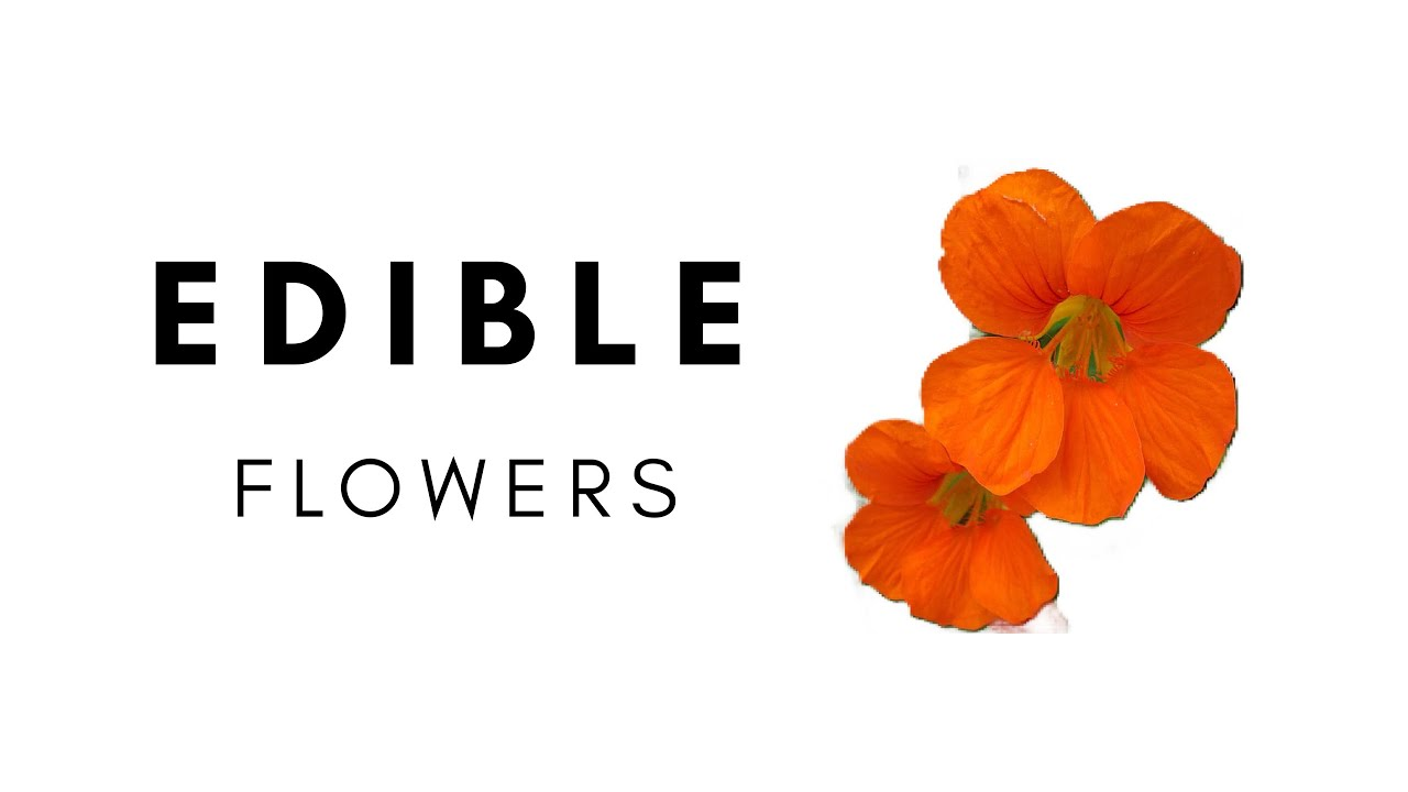 "Trumbull Students' Biology Club Presents, ""Edible Flowers"""