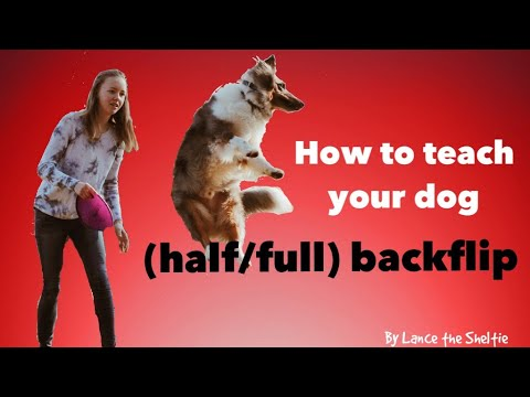 How to teach your dog BACKFLIP/ FLIP