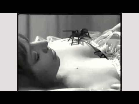 Spider Sonnet By John Whitworth (read By Tom O'Bedlam)