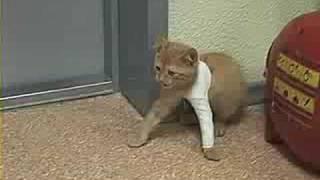 Похождения кота в Гипсе...