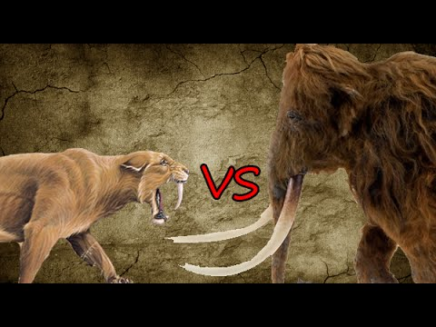 Saber-Toothed Tiger Pride vs Woolly Mammoth