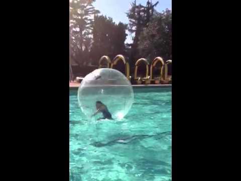 Fun balls acquatiche piscina delle rose IMG_0770MOV  YouTube