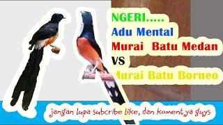 Top Hits -  Murai Batu Trek Borneo