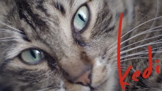 Kedi - Official U.S. Trailer - Oscilloscope Laboratories