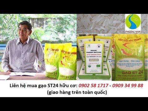 Gạo ST24 hữu cơ: NGON và AN TOÀN tuyệt đối như thế nào?