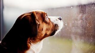 Любовь и верность собаки вечна!!! Собака которая ждала своего хозяина 8 лет.(, 2016-03-24T23:06:18.000Z)