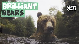 This is Why We Love Bears | Bears Being Awesome Compilation 2018