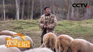 《攻坚日记》 20200401 洛古有伍的心结(3)|CCTV农业