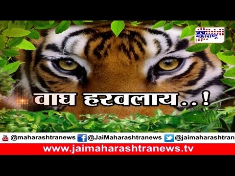 State's iconic tiger 'Jai' goes missing