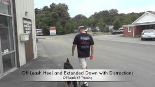 "German Shepherd ""akela"" Before/after Video! Electronic Collar Training Dc, Va, Md, California"