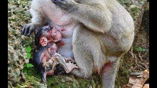 Welcome Newborn Baby Monkey !