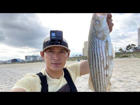 Striped Bass En La Playa De Long Branch New Jersey
