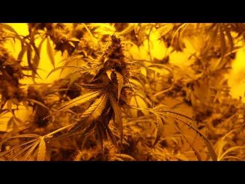 bc northernlights bloom box