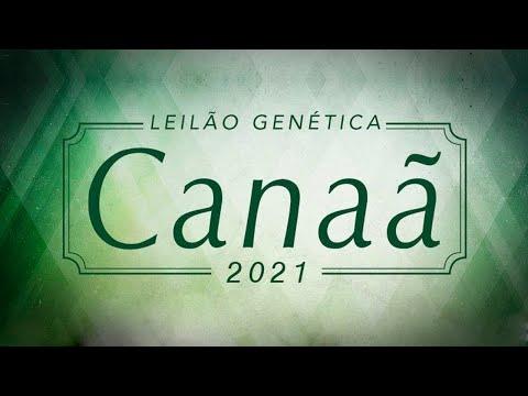 Lote 22   Exibida FIV AL Canaã   NFHC 442