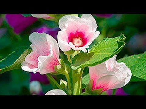 FLOWER PHOTOGRAPHY IDEA - Zero In