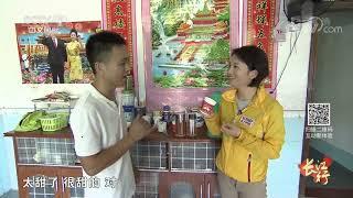 《远方的家》 20191108 长江行(66) 物丰景秀长水村  CCTV中文国际