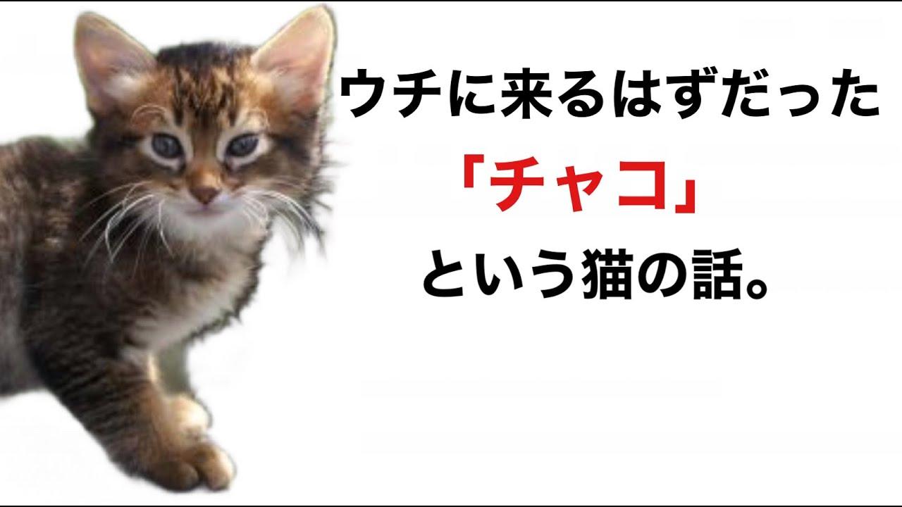 【40代  コツコツ暮らす】ブリーダーの猫を引き取ろうとした話