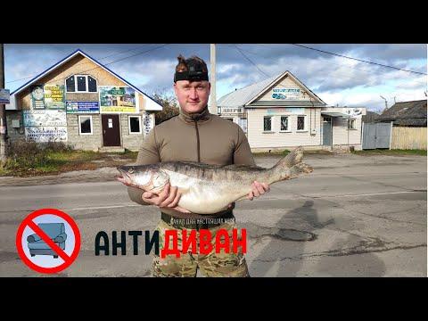 АнтиДиван - Охота и рыбалка на Волге, утка, тетерев, заяц и ванна рыбы.
