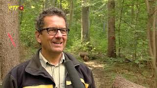 Kampf gegen Ausbreitung des Borkenkäfers im Reutlinger Stadtwald