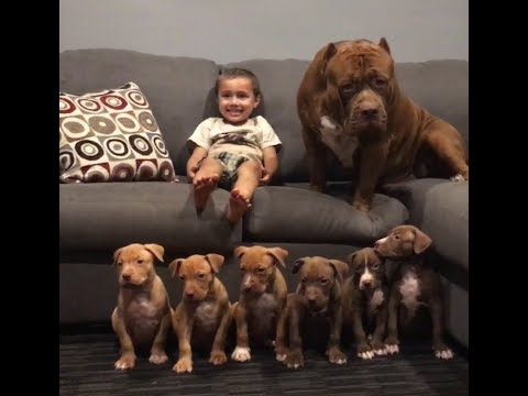 Raising world famous pit bulls (HULK PUPPIES) GIANT INCUBATOR
