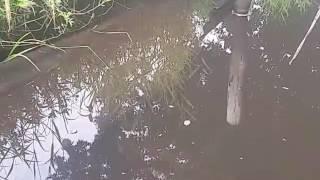 真夏のヤリタナゴ釣り