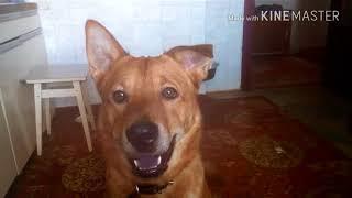 Дрессировка собак, средство от запаха
