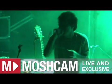 Animal Collective - In The Flowers | Live in Sydney | Moshcam
