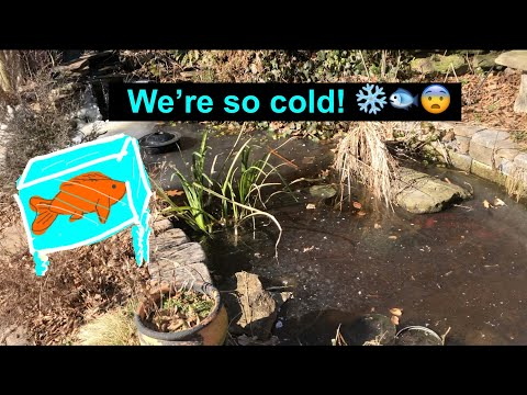 My Fish Are FREEZING!
