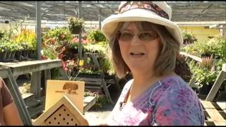 Episode 71: Garden Gate -Sue Chan, The Importance Of Bees (Sept  4, 2015)