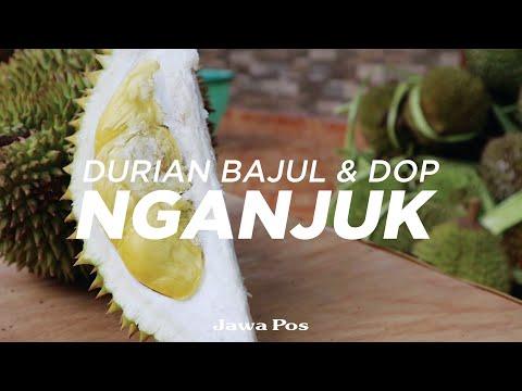 Jawa Pos Belah Durian Edisi 3: Durian Bajul Nganjuk