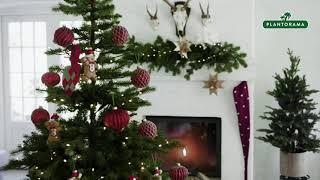 Gammeldags rød jul - med et sjovt twist | Jul i Plantorama
