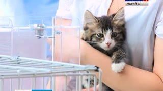 Бездомные кошки и собаки обрели новых хозяев на выставке-раздаче в Йошкар-Оле - Вести Марий Эл
