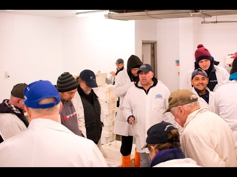 Brixham Fish Market Tour - From Boat To Plate In A Day With TLH Leisure Resort, Torquay