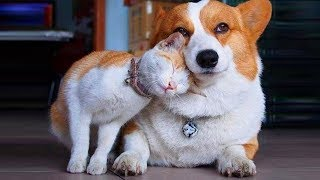 Funniest Cats and Dogs 😌 Awesome Funny Pet Animals' Life Videos