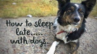 Puppy wakes up too early?  How to sleep late with dogs!