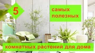 5 самых полезных комнатных растений для дома