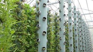 Khởi nghiệp với mô hình trồng rau sạch khí canh
